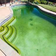 pool service las vegas